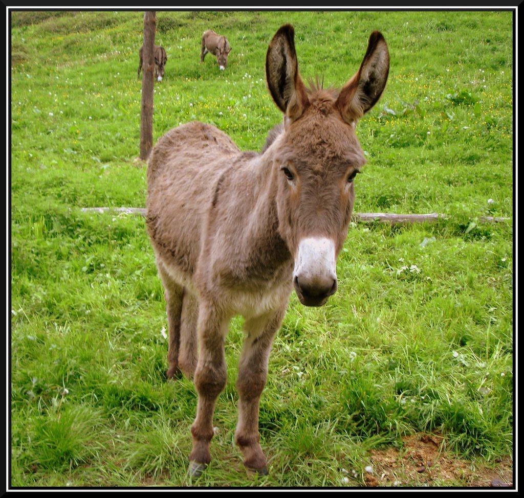 un burro se coje a news of the worlds read sources mujer se folla
