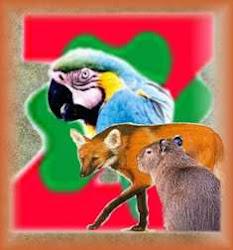 Zootecnia Brasil