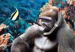Teoria do macaco aquático