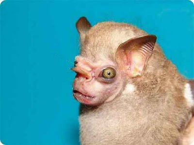 Real Weird Animals That Are Ugly