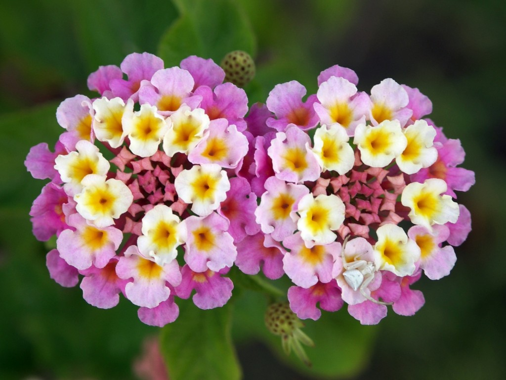 Top Most Beautiful Flowers