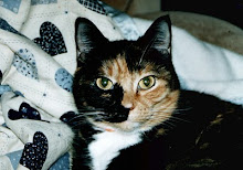 There's something special about a calico cat.  I will never forget this wonderful friend.