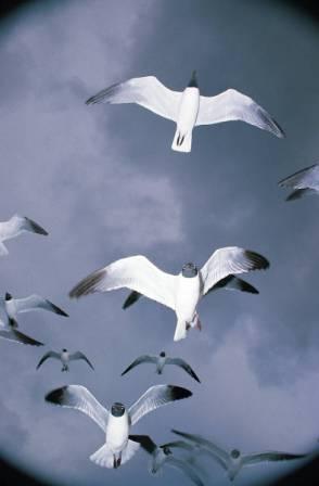 Zborul, graiul păsărilor șoptit inălțimilor