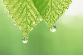 Lacrimi de verde, în puritatea anotimpului