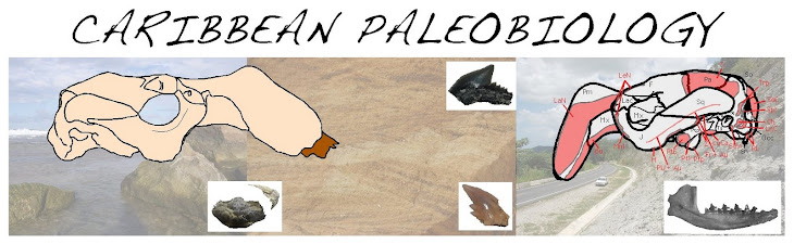 Caribbean Paleobiology