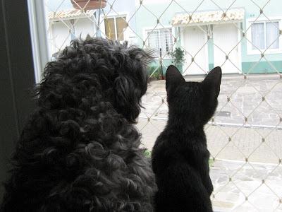 importancia da tela de proteção em apt. para gatos