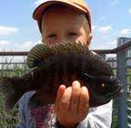 The Fishing Blog