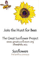 free sunflower seeds, great sunflower project