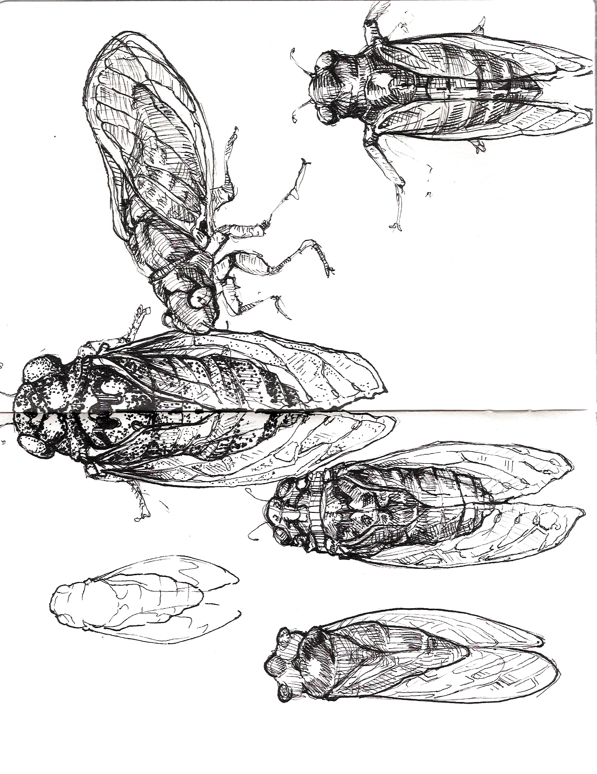 a study of cicada Total and methyl mercury contents and distribution characteristics in cicada, cryptotympana atrata (fabricius) dongmei zheng • zhongsheng zhang.