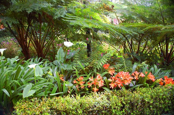 flores para jardins tropicais ? Doitri.com