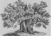 Dessin chêne d'Allouville
