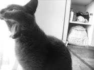 j'aime beaucoup à ma chatte ♥