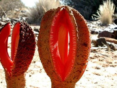 The World's Most Unusual Plants and flowers 03