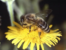 Help to Save Our Bees