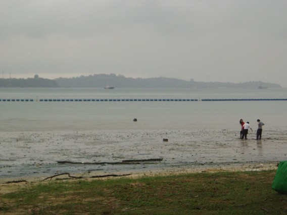 Water Quality Monitoring in Singapore's Natural Areas: January 2011