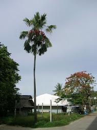 ต้นไม้ประจำโรงเรียน  เชิญชวนท่านผู้มีเกียรติทุกท่านร่วมแสดงความคิดเห็นเกี่ยวกับต้นไม้ประจำโรงเรียน