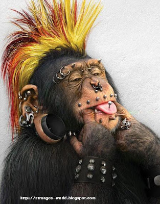 [Image: monkey-tribal-funny-monkey-pictures-01.jpg]