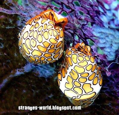 Strange sea creatures @ strange picture