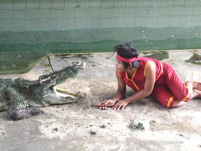 Crocodile wrestlers @ strange world