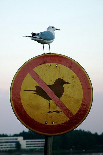Skilt, forbudt for måger