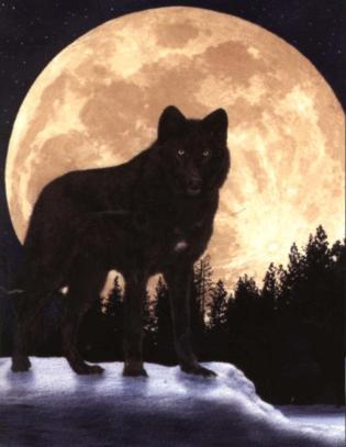 Tavs ulv med fuldmåne i baggrunden