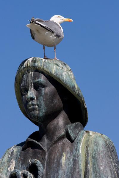 Mågerøv på statue