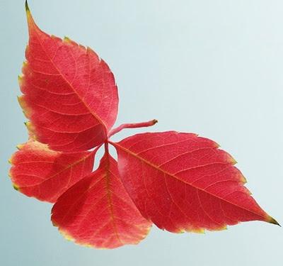 Efterårets blade som sommerfugl