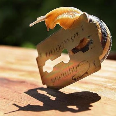 Selvmord i sneglefart