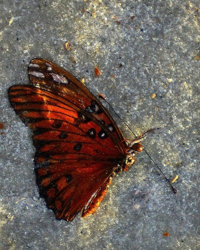 We are like butterflies who flutter for a day and think it is forever - Carl Sagan
