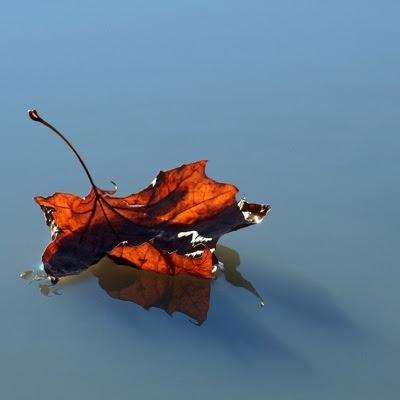 Vissent blad flyder væk i vandet