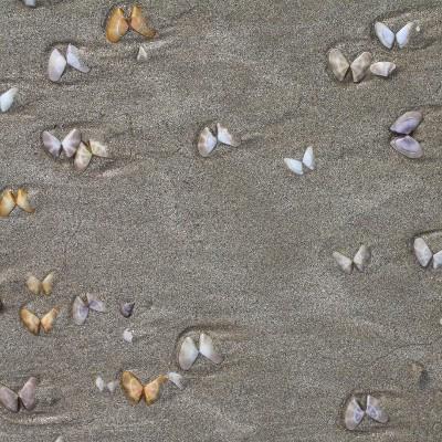 Muslingeskaller som 'sommerfugle' på stranden'
