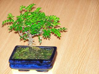 Natura.Plante de interior