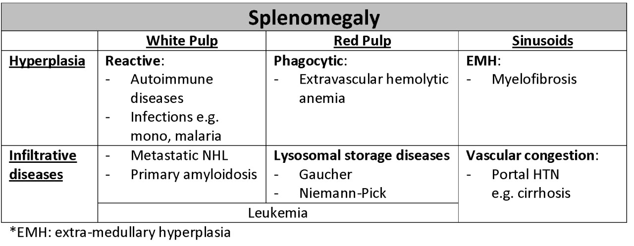usmle boot camp: splenomegaly, Skeleton
