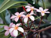 las flores de san lucas teteletitlan