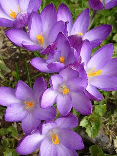 Devon Spring