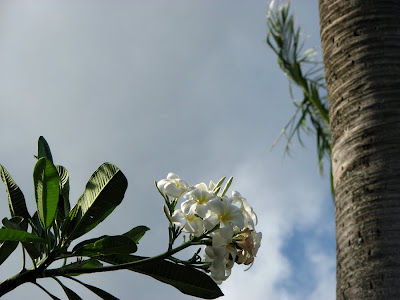 Flowers and Coconut Palm, Maui