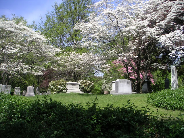 Mt. Auburn Cemetery, Watertown, Massachusetts - Spring Flowering Trees