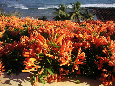 Orange Flowers, Sayulita, Mexico