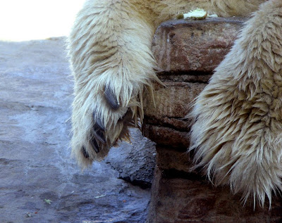 Polar Bear Feet, San Diego Zoo