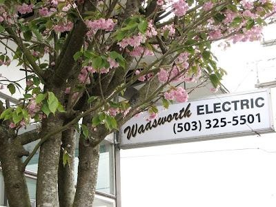 Falling cherry blossoms at Wadsworth Electric, Astoria, Oregon