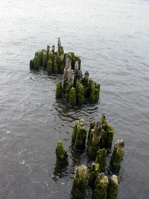Pilings in the Columbia River, Astoria, Oregon
