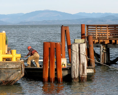 Pilings at the Pilot Boat Dock