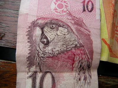 Parrot on Brazilian Money
