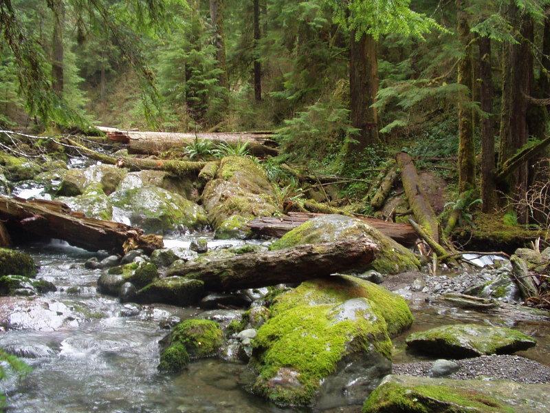 Rainforest near Lake Quinalt