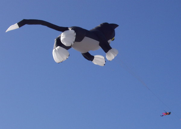 Kitty-Cat Kite