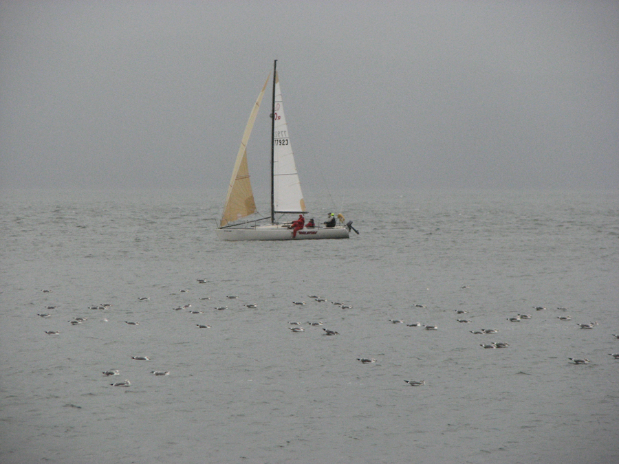 Sailboat and Seagulls on the River in the Rain