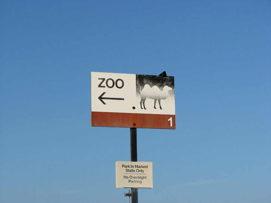 Camel on a Parking Lot Sign, San Diego Zoo