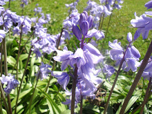 Pretty Blubells....