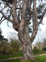Tolkien's Tree