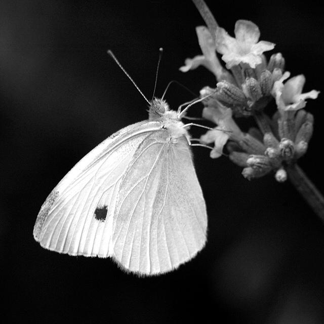 black and white flowers. lack and white flowers